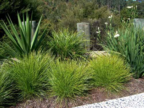 Nz Grasses For Landscaping Subtropicals garden writing workwithnaturefo